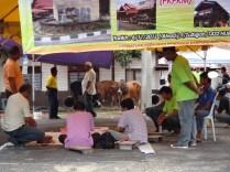 cows waiting for the chop Melaka