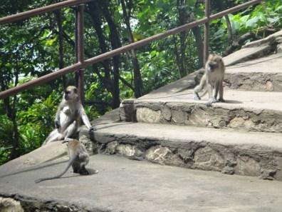 monkeys batu caves Kuala Lumpur