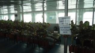 Seatran Ferry provides a foot massage service