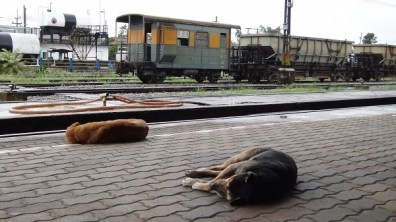 The dogs that call Chumphon train station home