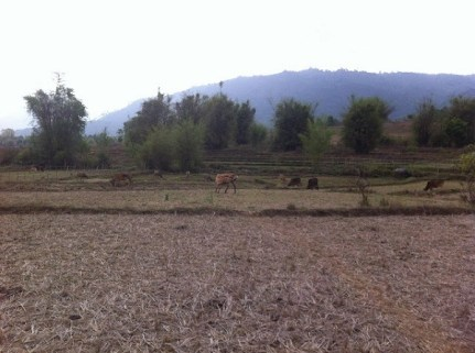 Phonsavan - Plain of Jars Site III - Walking Through The Rice Fields