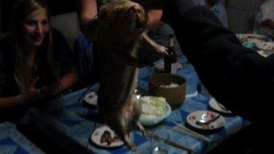 Vieng Xai - Bamboo Rat