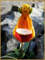 A happy alien flower, bearing a gift.