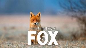 FOX by Esya G video DOWNLOAD - Download