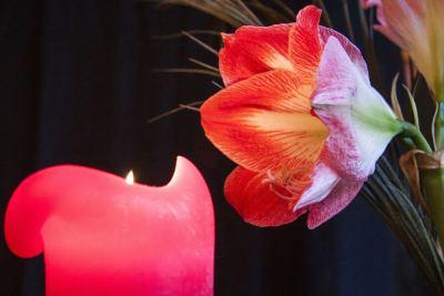 Apportez de l'énergie positive et de la magie dans votre maison