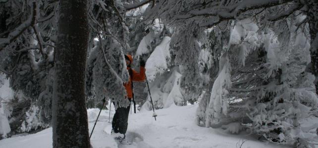 Schneeschuh-Erlebnis Zauberwald am Schneeberg