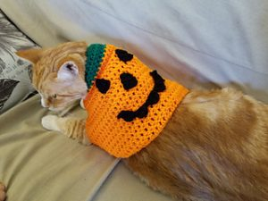 A Pumpkin Costume by To Craft A Home