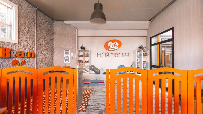 Harmonia, in arrivo gli asili nido per i cani: si comincia a Milano