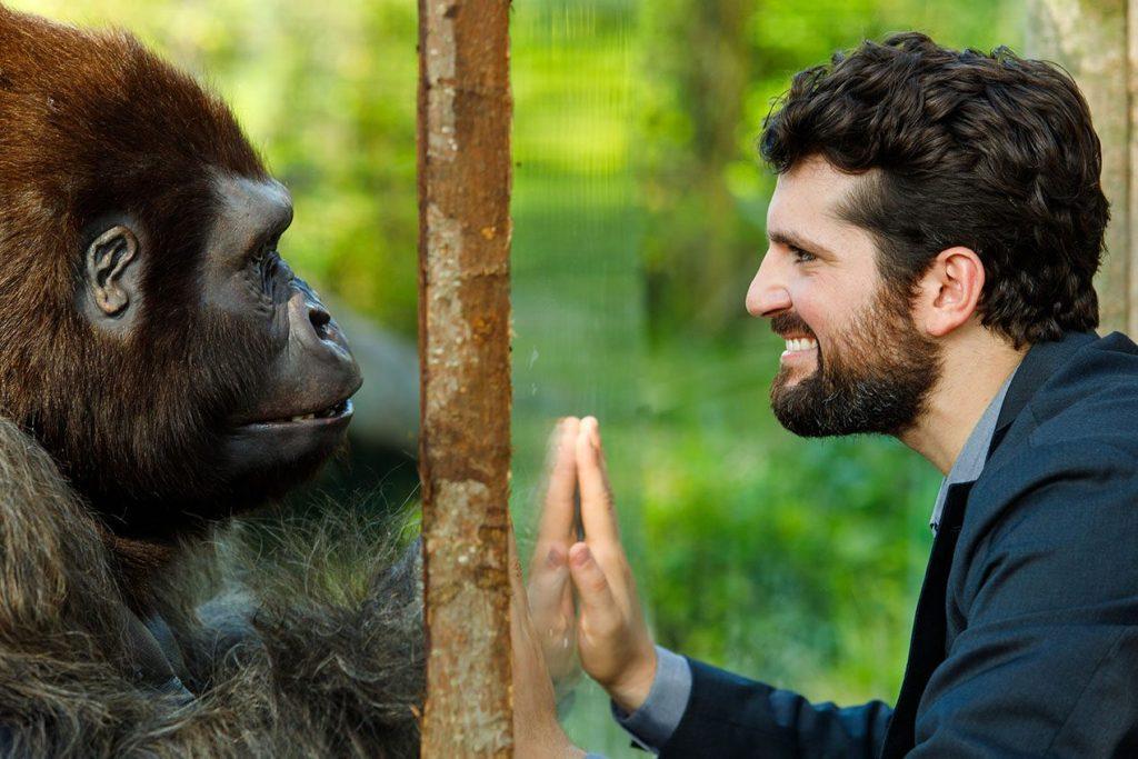 Attenti al gorilla Infinity+