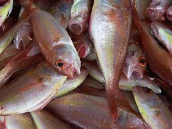 تفسير السمك في الحلم السمك المقلي والمشوي لابن سيرين