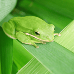 Time Management: Eat the Frog First