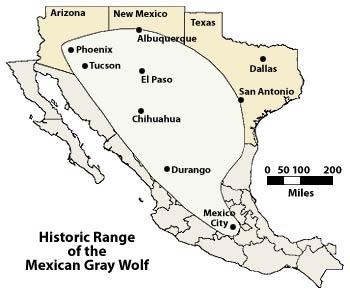 Rengo histórico del territorio que ocupaba el lbo gris mexicano.