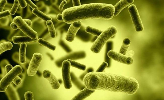 La OMS anunció las bacterias más peligrosas para el ser humano