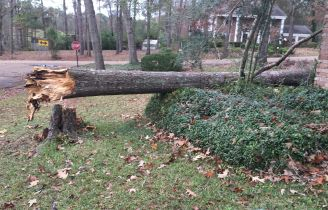 First picture of the tree that fell on our house