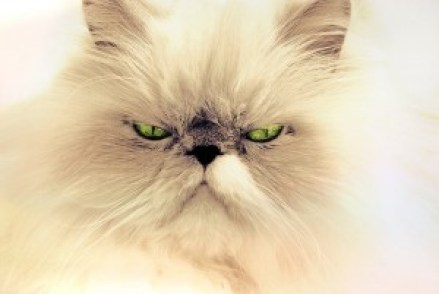 chakras du chat fermés