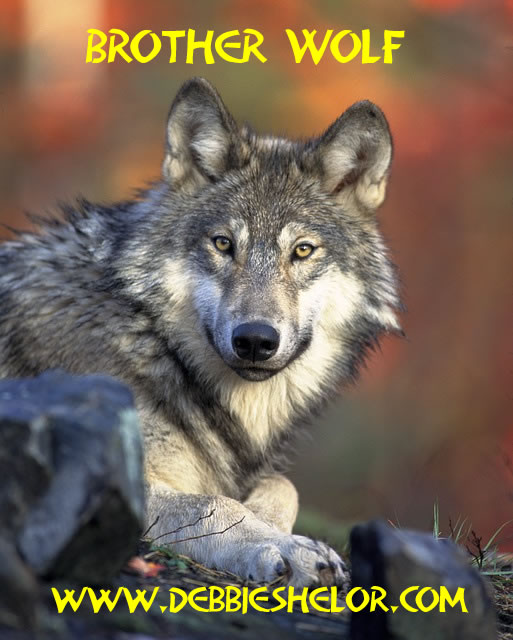 Wolves Reintroduced to Yellowstone