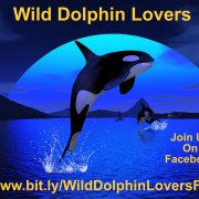 Free Guided Meditation for Dolphins, Whales, and Water