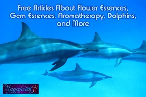 Free Articles About Flower Essences, Gem Essences, Aromatherapy, Dolphins, and More