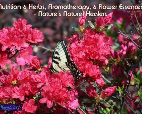 Flower Essences Aromatherapy Herbs for Health