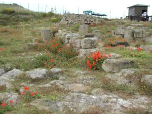 Red poppies at Tharros