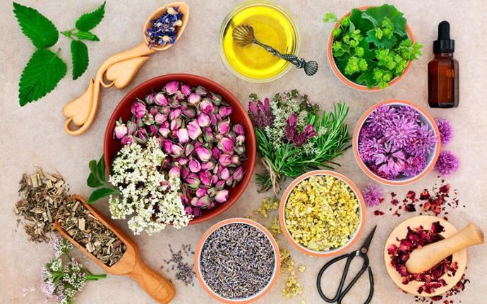 Hierbas rejuvenecedoras Medicinales
