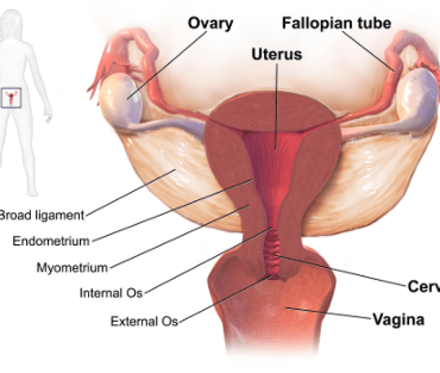 We Also Treat Common Stds Such As Trichomoniasis Herpes And Hpv And Abnormal Growths Such As Cervical Dysplasia Fibroids And Endometriosis