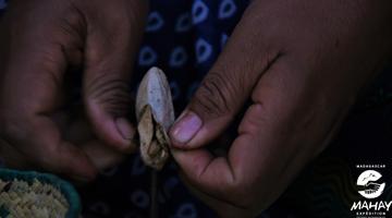 etaps de la préparation de la soie sauvage à Madagascar