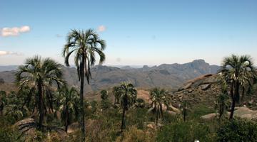 Observez la flore du parc national de l'Andringitra à Madagascar