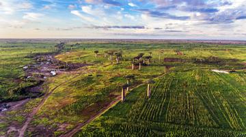 Déforestation dans l'Ouest de Madagascar