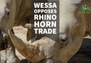 PROA Concern: WESSA Opposes Rhino Horn Trade