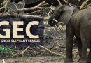 The Great Elephant Census (GEC)