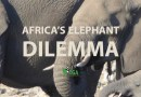 Africa's Elephant Dilemma – Part 1