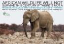 AFRICA'S  WILDLIFE  ARMAGEDDON  18