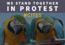CITES' Colonial Hangover Under Scrutiny
