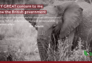 """""""Western"""" Irresponsible Interference in Africa's Wildlife Management Affairs"""