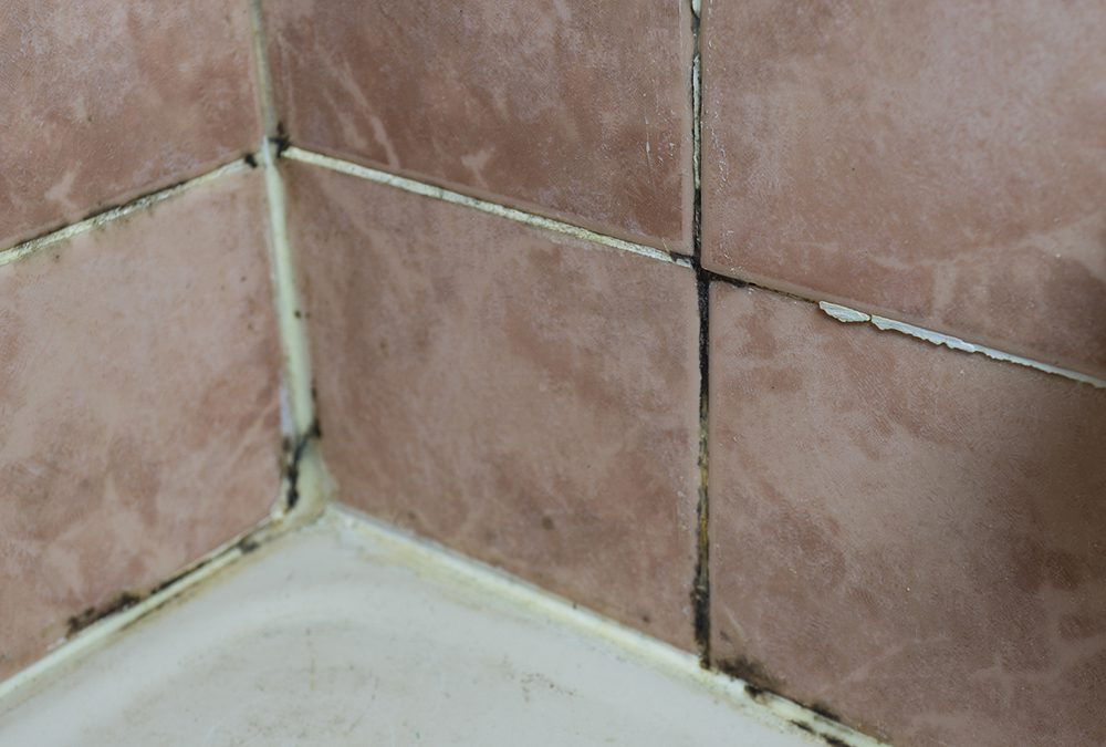 how to clean and banish mildew for real
