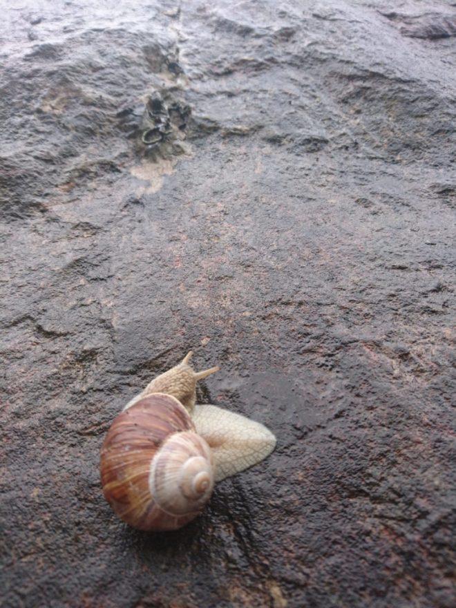 Rock climbing snail