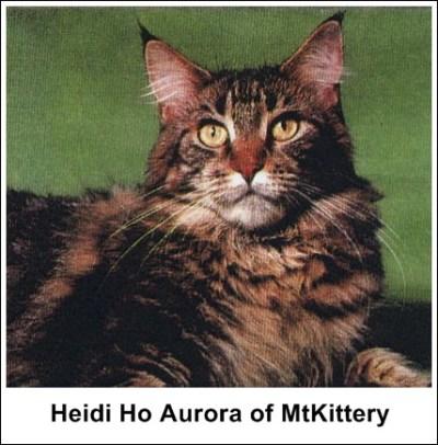 Heidi Ho Aurora of MtKittery