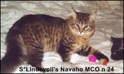 Lindevolls Navaho t