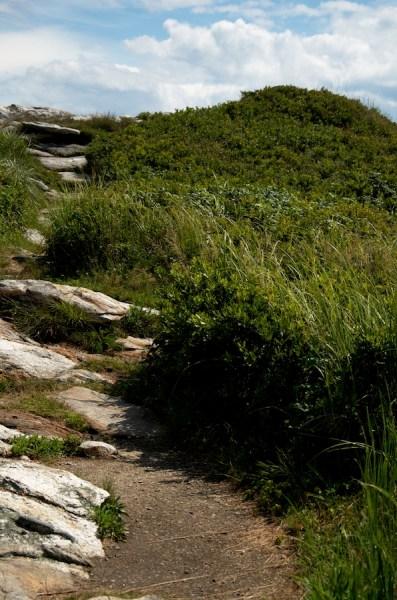Pathways along the shoreline.