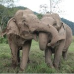 Helping Elephants and Crowdspeak Fr Blogger's Twitter Pal Daily Jan 4