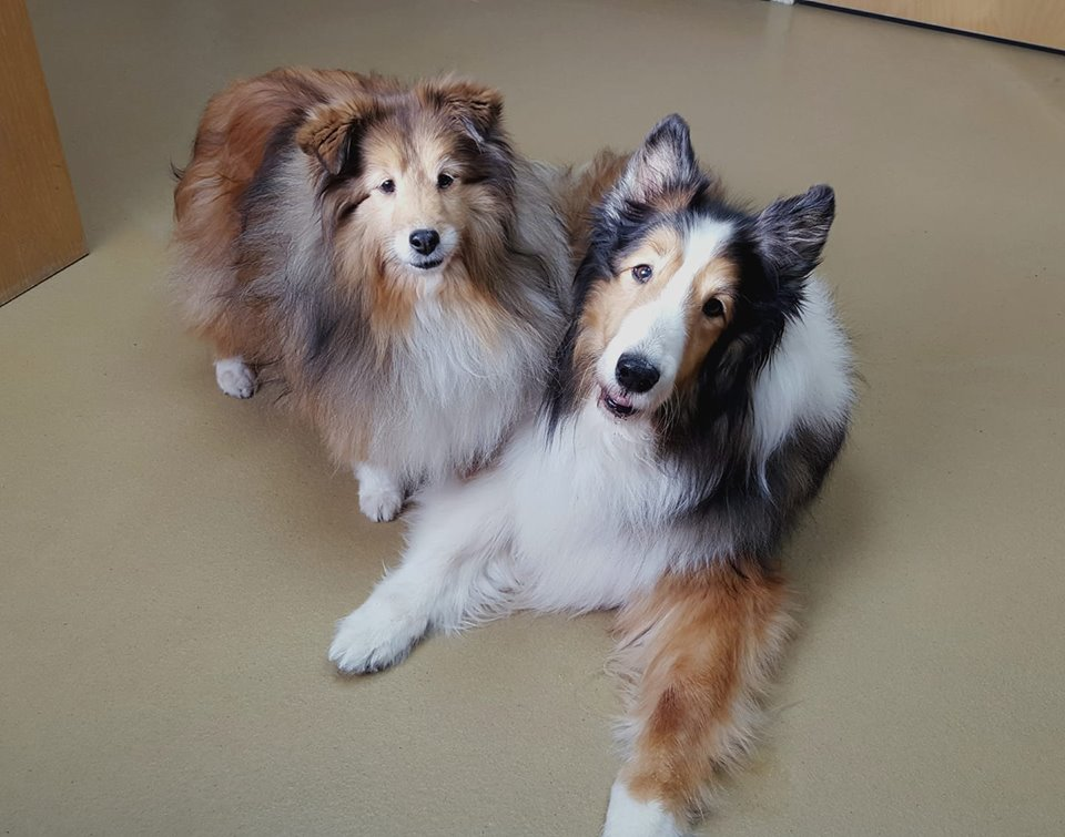 Bark-B-Q | mainesheltierescue org