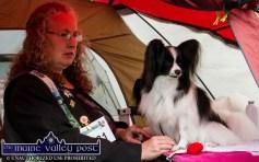 Irish Kennel Club Dog Show at An Ríocht 26-8-2017