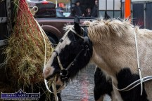 A bite of good hay was welcomed by this finely harnessed animal at Friday's annual November 1st Horse Fair Day in Castleisland. ©Photograph: John Reidy