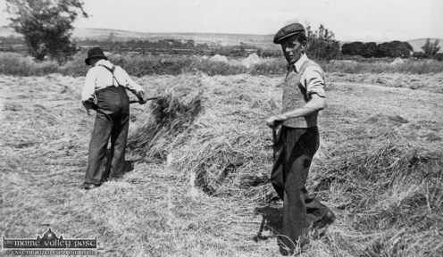 Jamesie Geaney in the foreground with my grandfather, Johnny Reidy turning hay in the small field just behind the second bridge on the left hand side (facing west) of Tralee Road in the late 1940s. Photograph: Michael Reidy.