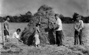 The late Jimmy Reidy (second from left) saving hay with the family in the low field opposite Leane's gate on the Tralee Road in the late 1980s. With from left: Willie Reidy, Liz Reidy, Danny Reidy and Jamesie Geaney. Photograph: John Reidy