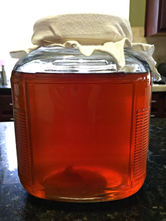 make homemade kombucha resting