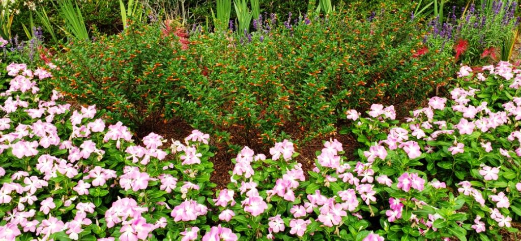 Benefits of Ground Cover Plants