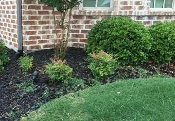 Grass in flower beds at Phillips Creek Ranch residence. Image features green sod grass in the lawn with edging and a plant bed with Crape Myrtle tree, mulch and other Texas native shrubs next to a brick exterior home.