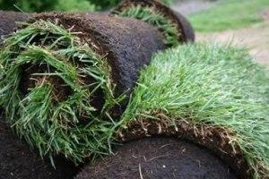 Sod grass installation services, Zoysia sod rolls